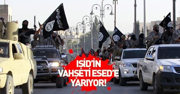 IŞİD'in vahşeti Esed'a yarıyor!