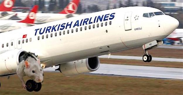 THY uçağından çıkan fare büyük panik yarattı!