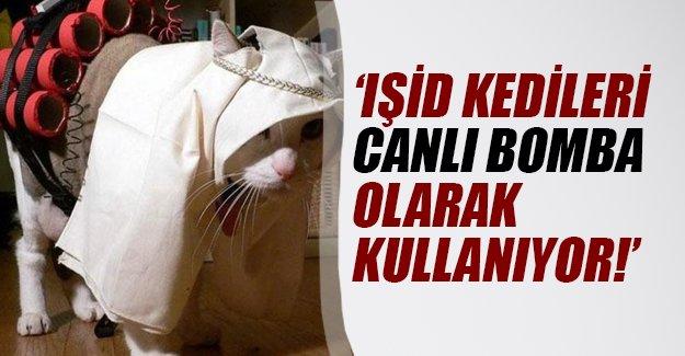 IŞİD canlı bomba olarak kedileri kullanmaya başladı!