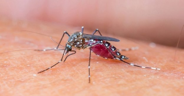 Zika virüsü Türkiye'yi tehdit ediyor mu ?