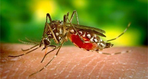 Zika virüsü o ülkeye de sıçradı