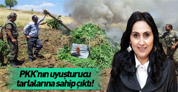 PKK'nın uyuşturucu tarlalarına sahip çıktı