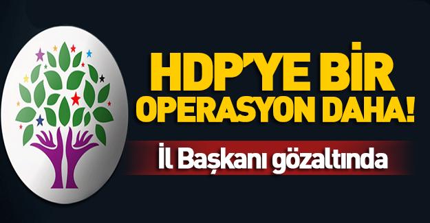 Adana'da HDP'ye operasyon! İl Başkanı gözaltında