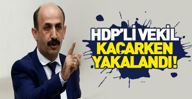 Firari HDP'li vekil yakalandı!