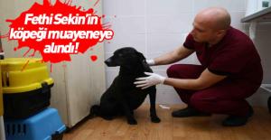 Şehit polis Fethi Sekin'in beslediği köpeğe muayene