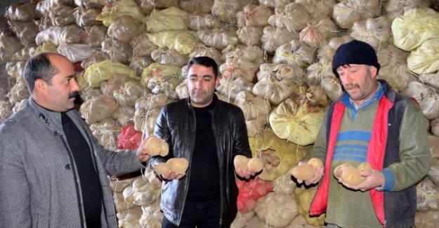 Terör çiftçiyi vurdu! Tonlarca patates elde kaldı!