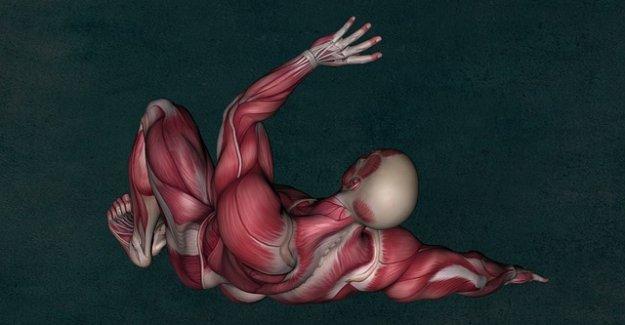 Vücut Geliştirmede Yağlar Kasa Dönüşür Mü?