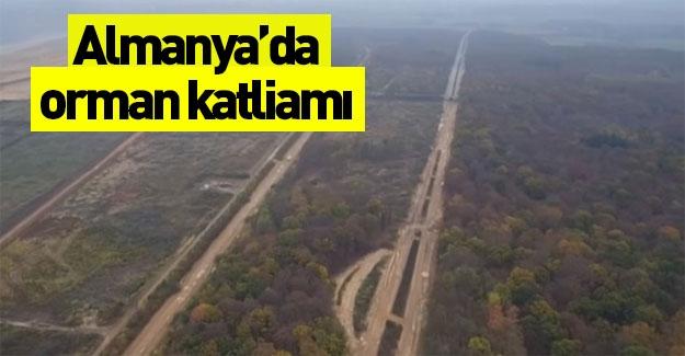 Almanya'da orman katliamı