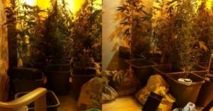Evde uyuşturucu yetiştiren öğretmenler yakalandı